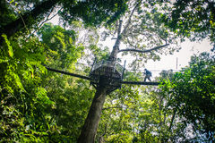 Silhouette on a Canopy Walk Royalty Free Stock Photo