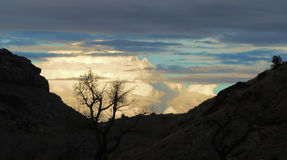 Silhouette in the Canyon. Silhouette of a bare tree in the canyon in front of the evening clouds Stock Photos