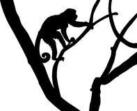 Silhouette of Capucin Monkey Stock Photography