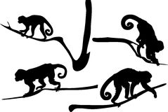 Silhouette of Capucin Monkeys Royalty Free Stock Image