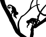 Silhouette of Capucin Monkeys Royalty Free Stock Photo