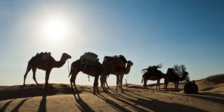 Silhouette of a caravan of camels in sand dunes - South Tunisia. Silhouette of a caravan of camels in sand dunes in South Tunisia Royalty Free Stock Photo