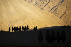 Silhouette of caravan travellers riding camels Nubra Valley Ladakh ,India Royalty Free Stock Photo