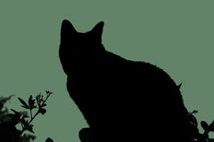Silhouette cat Stock Image