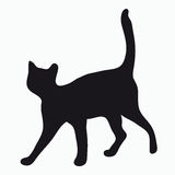 Silhouette of a cat Royalty Free Stock Photo