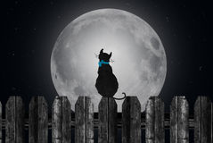 Silhouette of cat with full moon Stock Photos