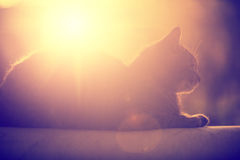 Silhouette of a cat lying against the sun Royalty Free Stock Photos