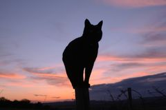 Cat silhouette against pinky blue sky. Silhouette of a cat on post at sunset with pinky blue sky behind Royalty Free Stock Images