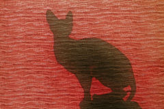 Silhouette cat at the red window. Silhouette cat at the window, colored shutters, sphinx Royalty Free Stock Photography
