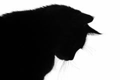 Silhouette of the cat. A shadow image of a cat's silhouette Royalty Free Stock Photography