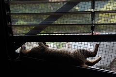 Silhouette of cat supine on the bridge. Royalty Free Stock Image