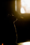 Silhouette of cat on window. Silhouette of a beautiful cat Stock Photography
