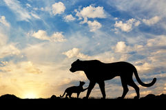 Silhouette of a cheetah and cubs Royalty Free Stock Photos