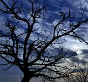 Silhouette of chestnut tree under intense sky of dawn Stock Photo