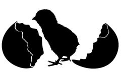 Silhouette of a chicken and an egg hatching. Stock Image