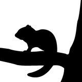 Silhouette of chipmunk on the tree. Royalty Free Stock Photos