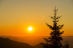 Silhouette of a Christmas tree at dawn against the background of Carpathian mountains in summer. Ukraine. Silhouette of a Christmas tree and a bright sun at Stock Images