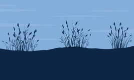 Silhouette of coarse grass on hill landscape Royalty Free Stock Image