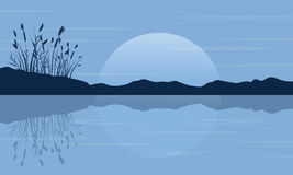 Silhouette of coarse grass on the lake scenery Royalty Free Stock Photography
