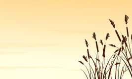 Silhouette of coarse grass landscape Stock Photography
