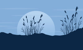 Silhouette of coarse grass with moon scenery Royalty Free Stock Photography