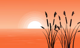 Silhouette of coarse grass on riverbank Royalty Free Stock Photo