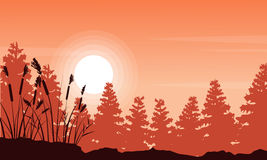 Silhouette of coarse grass and spruce forest landscape. Vector Royalty Free Stock Images