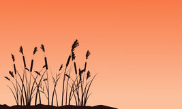 Silhouette of coarse grass on sunset landscape Royalty Free Stock Photos