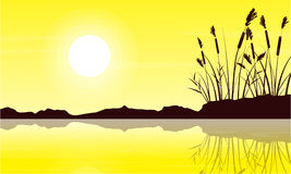Silhouette of coarse grass with yellow sky landscape Stock Images