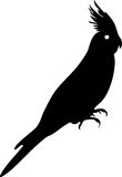 Silhouette of cockatiel Royalty Free Stock Photo
