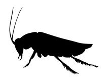 Silhouette of cockroach Royalty Free Stock Photography