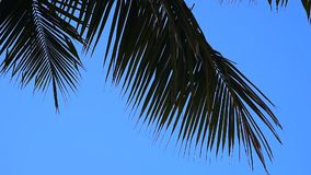 Silhouette of coconut leaf wit stock video footage