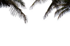 Silhouette  coconut leag Royalty Free Stock Photography