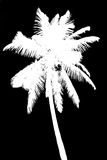 Silhouette of coconut palm isolated on black Royalty Free Stock Images