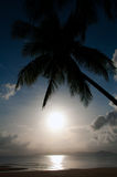 Silhouette coconut palm and sea Stock Image