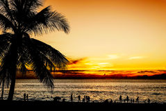 Silhouette coconut palm tree on beach sunset in twilight. Silhouette coconut palm tree and some people with color of sunset in twilight dark tone style Stock Image