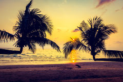 Silhouette coconut palm tree Stock Photography
