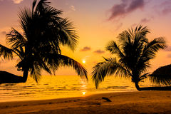 Silhouette coconut palm tree Stock Images