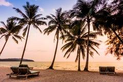 Silhouette coconut palm tree Royalty Free Stock Photos