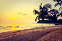 Silhouette coconut palm tree Stock Image