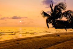 Silhouette coconut palm tree Royalty Free Stock Photography