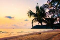 Silhouette coconut palm tree Stock Photo