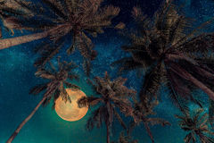 Silhouette coconut palm tree with the full Moon and Milky way ga Royalty Free Stock Images