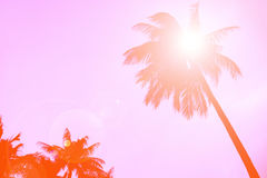 Silhouette coconut palm tree with lens flare, retro orange color background. Royalty Free Stock Photography