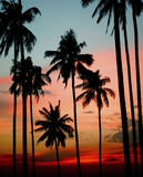 Silhouette Coconut Palm Tree Outdoors Concept stock photography