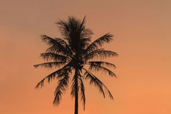 Silhouette of coconut palm tree Stock Photo
