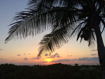 Silhouette of coconut palm tree. At tropical sunset Stock Photos