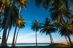 Silhouette coconut palm trees against blue sky with sun light. Summer beach concept. Silhouette coconut palm trees against blue sky with sun light. Summer sea Stock Images