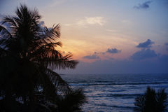 Silhouette of coconut palm trees against evening sea Royalty Free Stock Photos