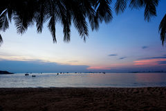 Silhouette of coconut palm trees against a sunset on the beach.  Stock Image